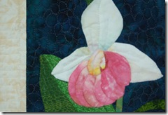 showyladyslipper_detail