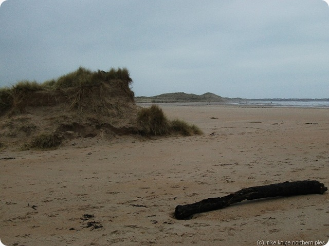 dune and driftwood