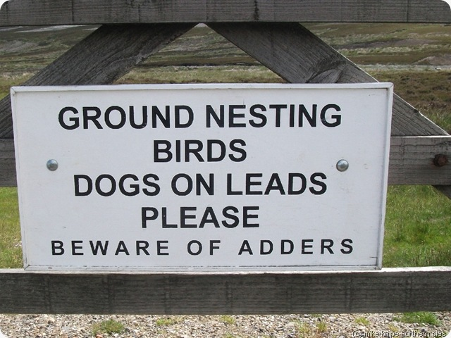 """the sign next to it says """"no dogs"""""""