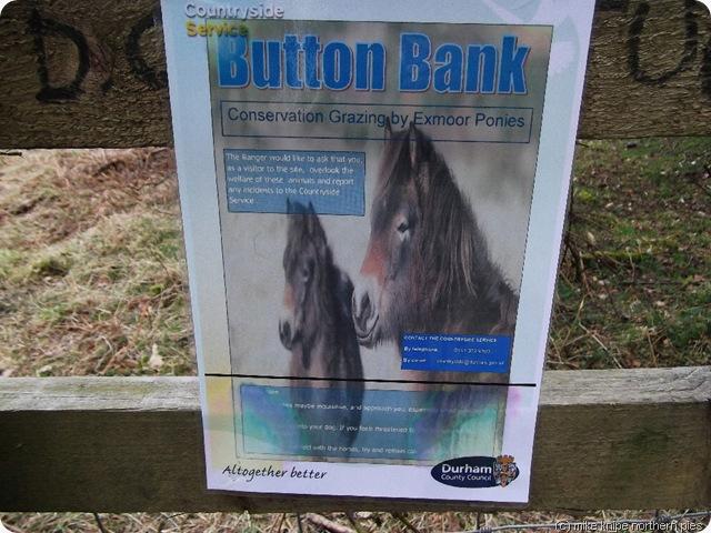 pony notice