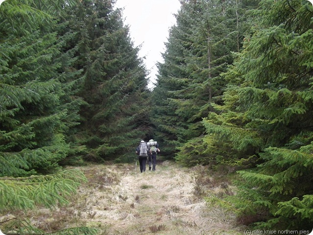 up the forest