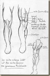 anatomie_bein4