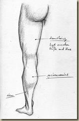 anatomie_bein8