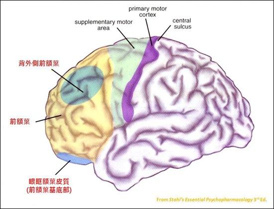 Dorsolateral prefrontal cortex