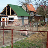 Russisches Haus in der Nähe des Waldbades