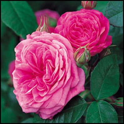 Gertrude Jekyll