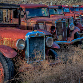 All in a Row by Tom Reiman - Transportation Automobiles ( trucks, retired )
