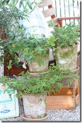 hagen og sneglekrig 016