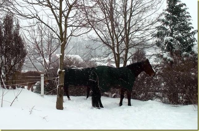 Pferde-rein-neu