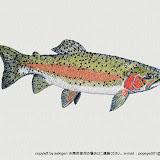 関源直接刺繍シリーズ・淡水魚