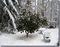 a-Rhodie_snow 4