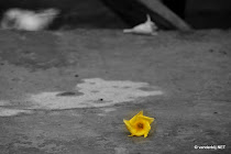 A lonely flower on the pavement in Battambang