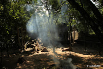 Rays of sunlight falling through smoke among the trees that surround Beng Mealea