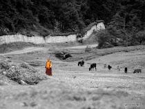 Monk in the Tibetan highlands around Shangri-la, near Da Bao monastery