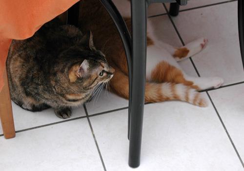 unterm Tisch ist es sicher
