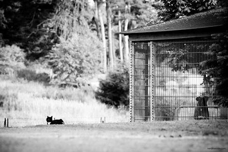 freie Katze und Hund im Zwinger in Gothen, Mecklenburg-Vorpommern