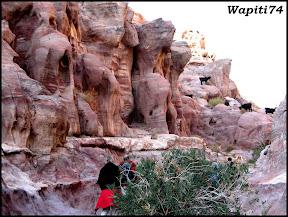 Jordanie : au pays des Nabatéens, des Grecs, des Croisés... et de Dame Nature ! 263%20Petra%20-%20canyon%20rose
