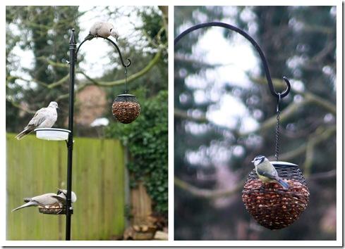 2010 Feb birds