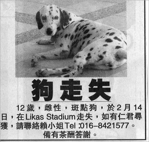 missing dog2
