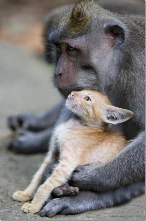 Monkey-and-mouser-600x914