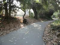 Los Gatos Trail 101.JPG