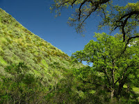 Sunol Regional Wilderness Hike 037.JPG Photo
