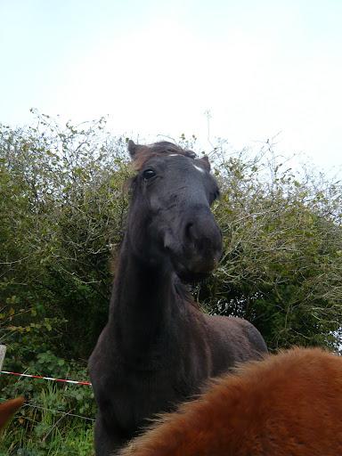 Vos plus belles grimaces de cheval et photos gag .... - Page 6 P1120282