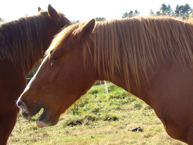 Vos plus belles grimaces de cheval et photos gag .... - Page 6 DSC00876_det
