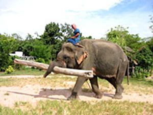 استعراض الفيلة