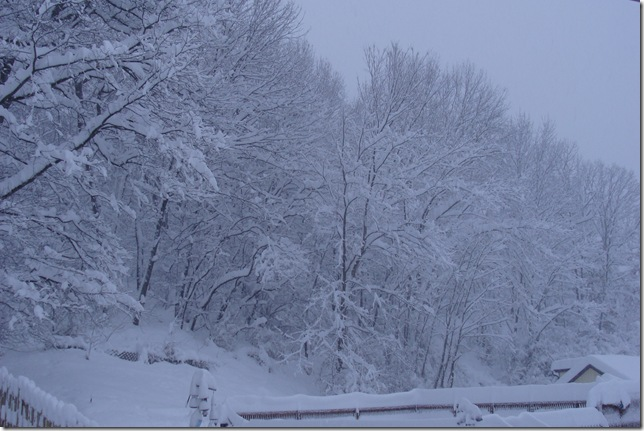 SNOW STORM FEB 6 2010 (21)