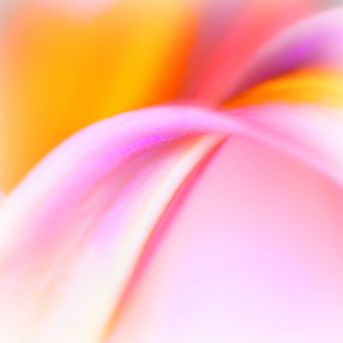 flower-abstract-10
