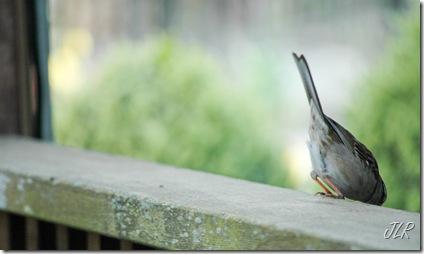 BirdyButtACR
