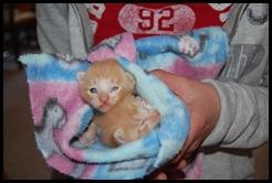 kitties and craigslist 002