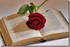 rosa-e-libro-san-giorgio