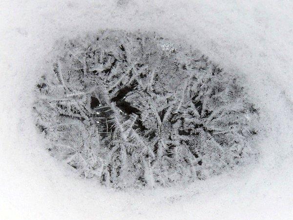 frost egg