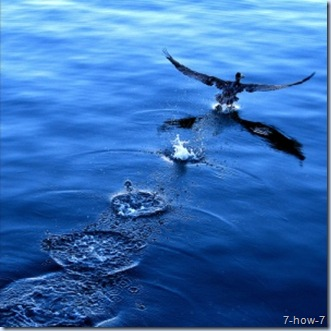 bird-taking-off