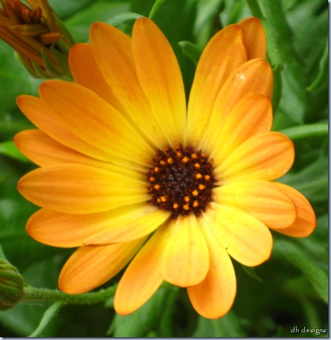 cropped yellow flower