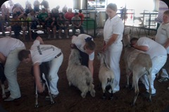 goat06