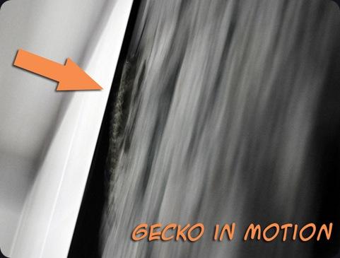GeckoA