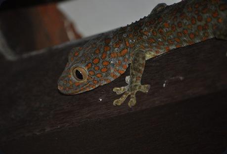GeckoF