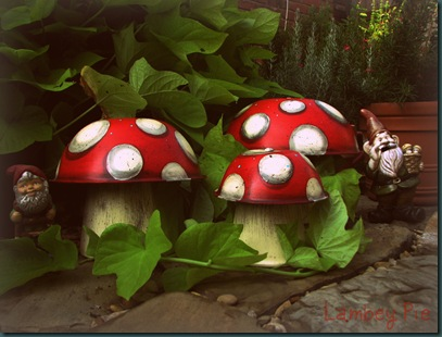 mushrooms gnomes 4 wm.jpeg