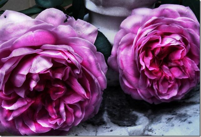 Marbled Rose I