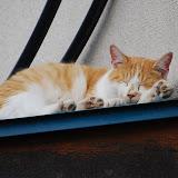 よく睨む猫。寝顔はカワイイ。