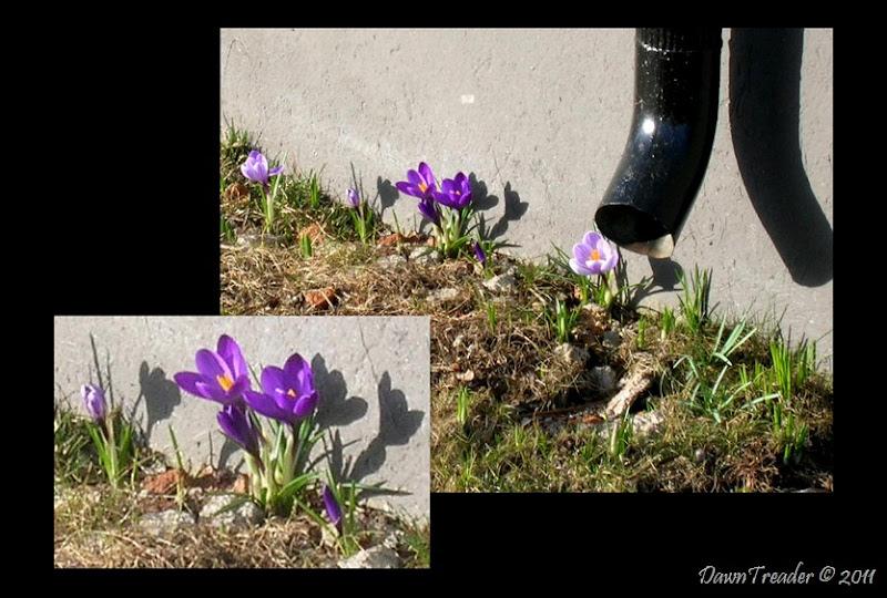 2011-03-24 spring2