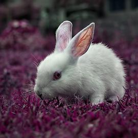 White Rabbit.. by Dipjyoti Sarma - Animals Other