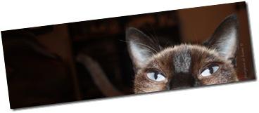 Ojos felinos