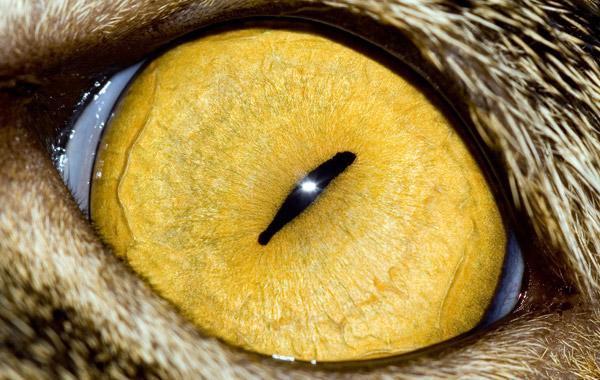 Фотографии кошачьих глаз (42 фото)