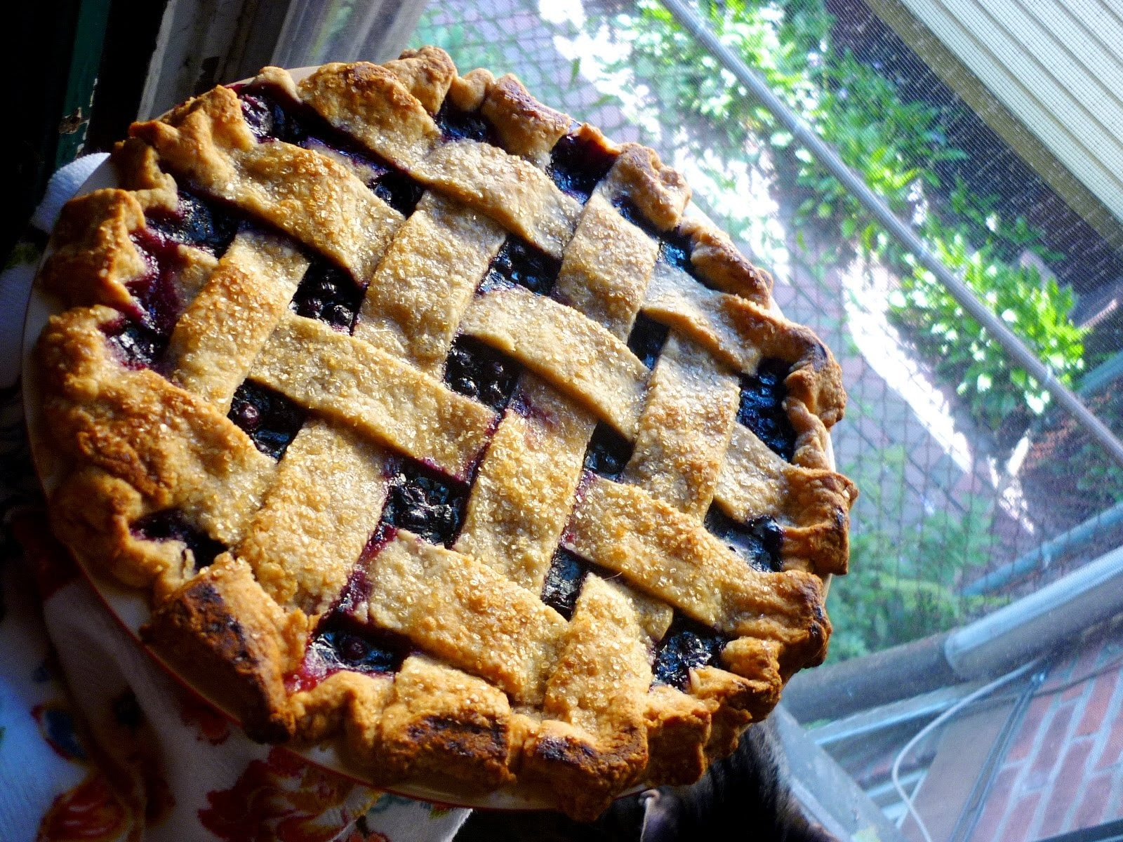 cranberry and wild blueberry pie recipes remembered wild blueberry pie ...
