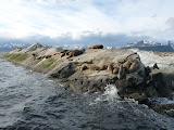 Notre colonie de lions de mer la + australe