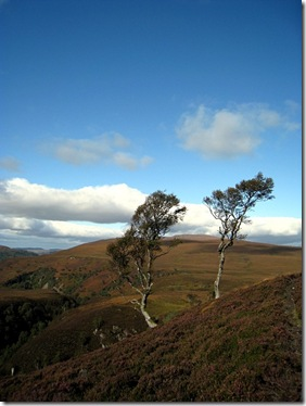 tree_and_glen_achall